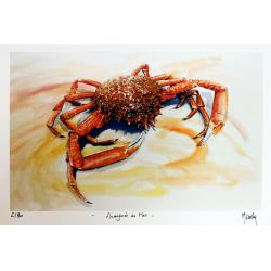 Araignée de Mer - Tirage d'Art