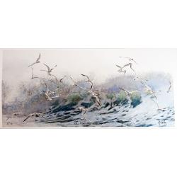 Tirage d'Art - Les mouettes rieuses - seul